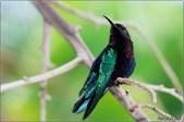 hummingbirdinmartinique