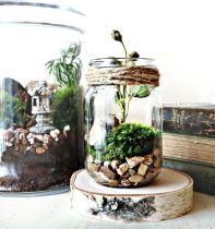 Decor Quick Tips - Terrarium (1)