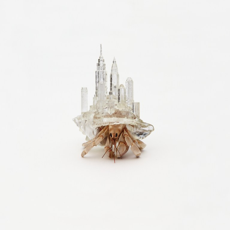 """Why not hand over a shelter to hermit crabs"" by Aki Inomata. Photo courtesy of Maho Kubota Gallery"