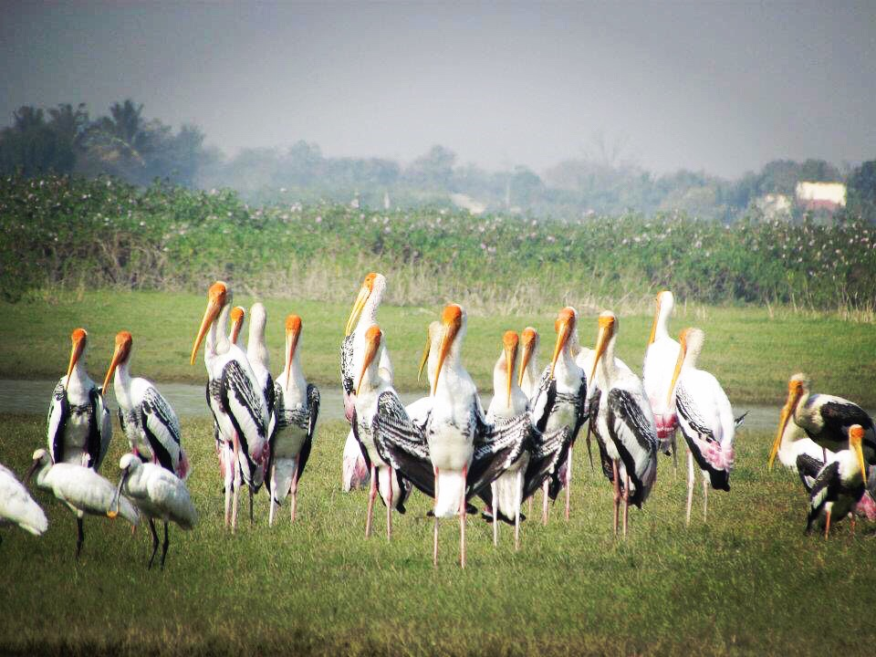 "India-""Bhigwan"" Water Migratory Birds Paradise!!!"