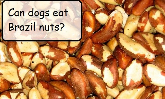 can dogs eat walnuts