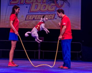 Photo of Chris Perondi's Stunt Dog Experience by Scott Norse