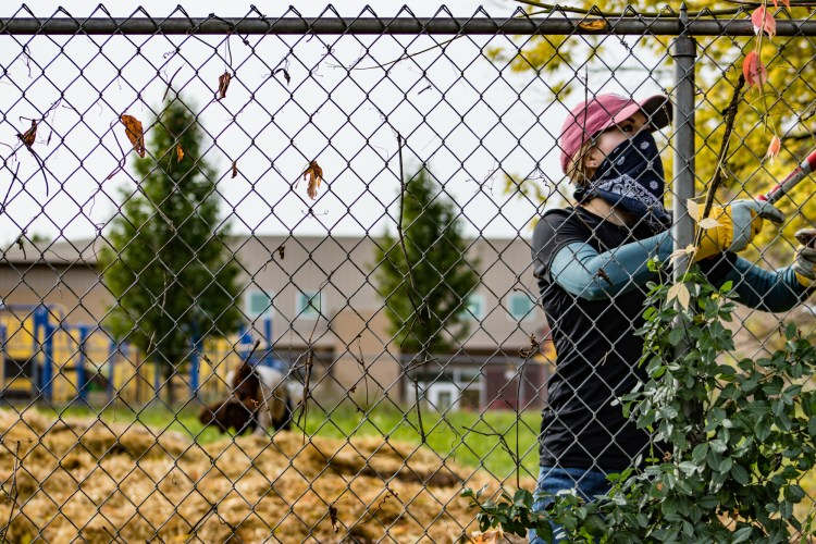 Kayla Collins, marketing and events manager at Habitat for Humanity of Summit County, cuts vines from a fence in University Park.