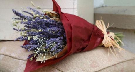 Pollyfield's Lavender