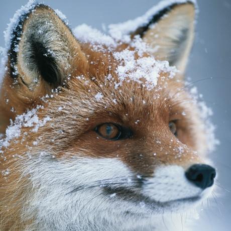 Devon Wildlife Trust Christma Card