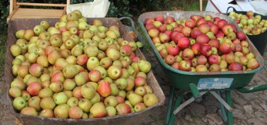 Apple Day at The Sharpham Trust