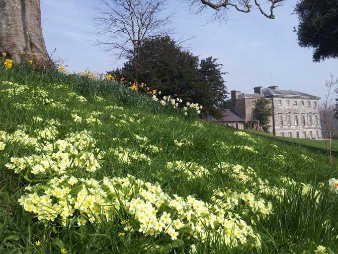 Sharpham Garden spring 2015
