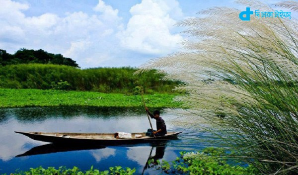 Catkin and riverine landscapes in Bangladesh
