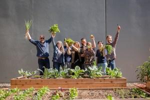 Steviva Edible Garden