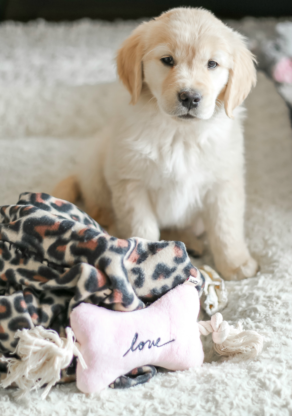 gifts for puppy goldenacresdogs