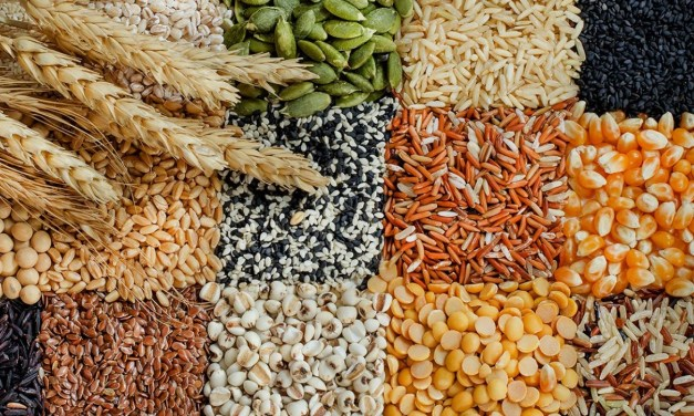 Virtually all of our paleolithic ancestors regularly consumed grains and legumes