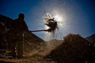 Winnowing the barley harvest in Lamayuru, Ladakh.