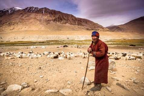 A nomadic Changpa herdsman of Tsomoriri.