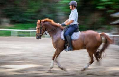 Horses for Courses – Mr. Johari Lee