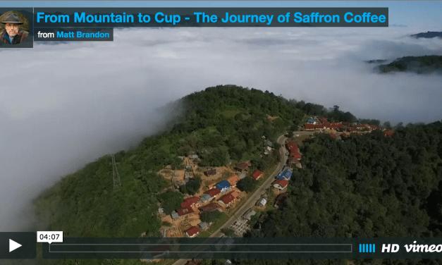 Saffron Coffee Shoot