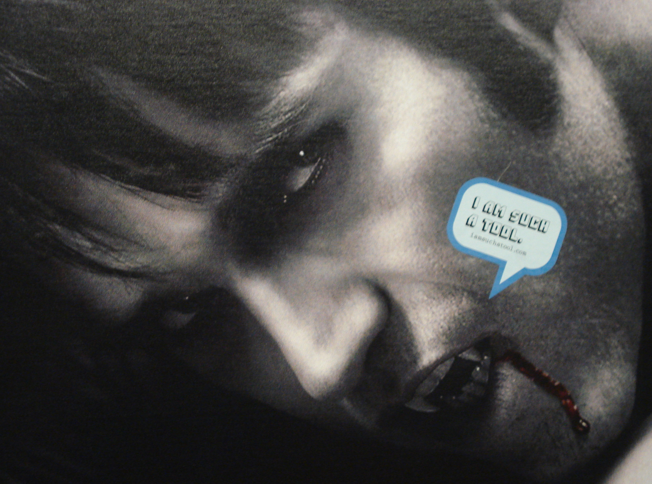 "An advertisement for the second season of HBO's True Blood.  The little word bubble emerging from Bill's mouth states, ""I am such a tool."""