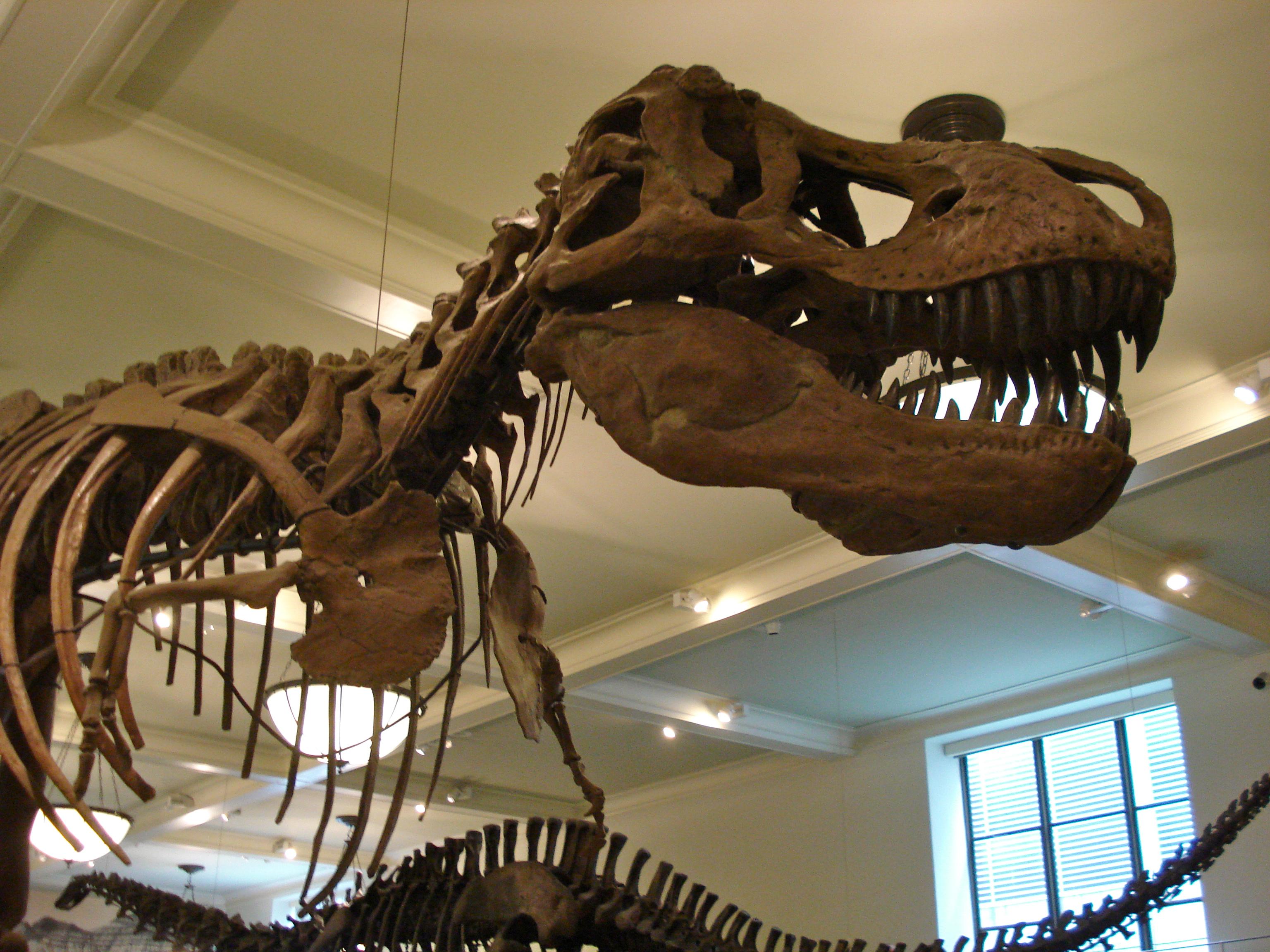 You made a T. Rex?