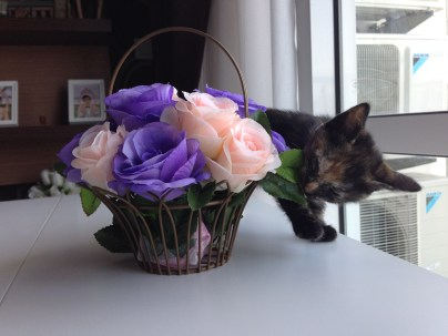 Are these flowers mine?