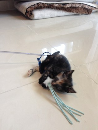 """Trying to catch a """"mouse"""" on a string."""
