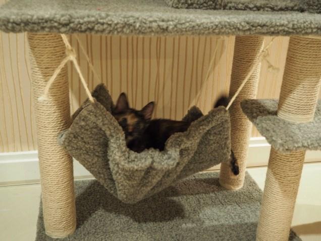 Enjoying the hammock.