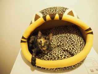 Lovin' my new crib.