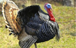 wpid-turkey210114.jpg