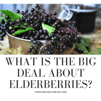 What is the Big Deal About Elderberries?