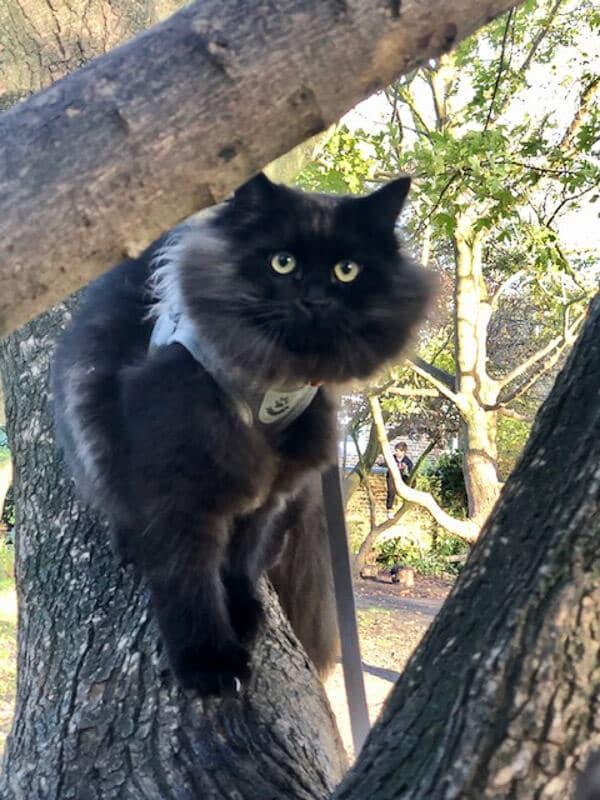 black siberian cat in tree