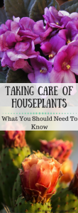 Houseplants -Making My Home Happy