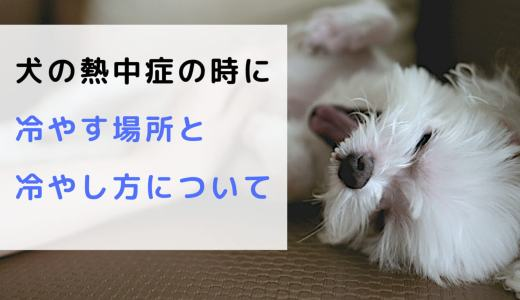 犬が熱中症のときに冷やす場所と冷やし方について!