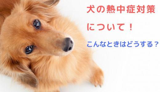 犬の熱中症対策について!