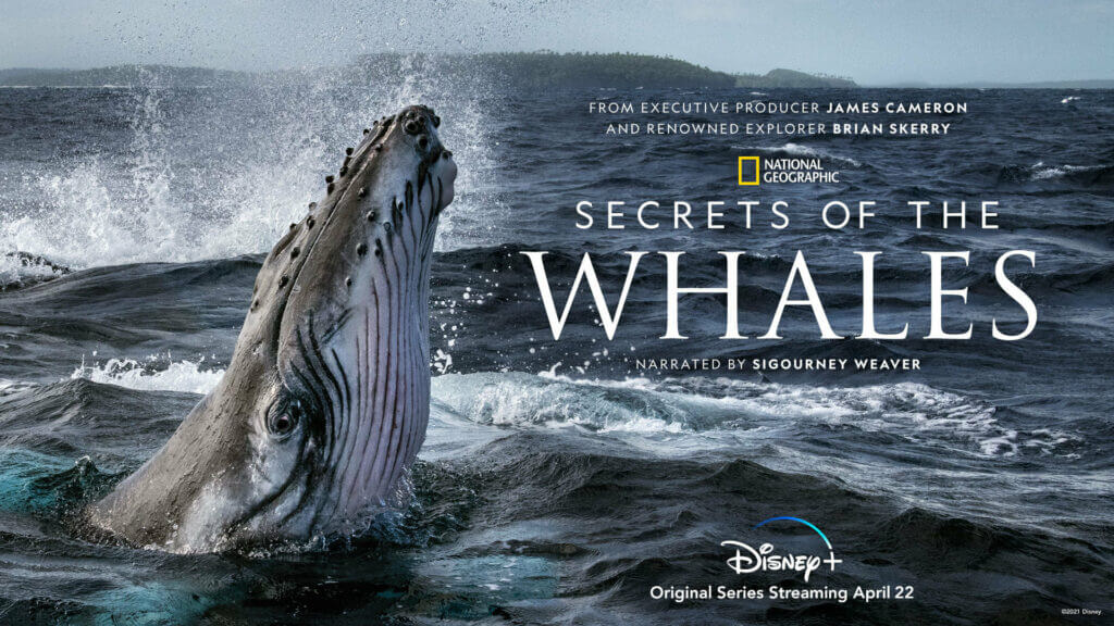 National Geographic's 'Secret of the Whales' Coming to Disney+ -