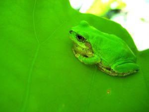 837679_frog