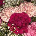 hidden mickey flowers