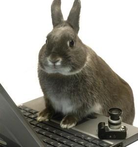 bunny laptop image