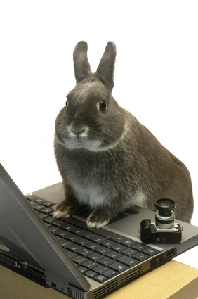 bunny laptop image