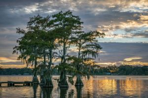 Louisiana lake & trees
