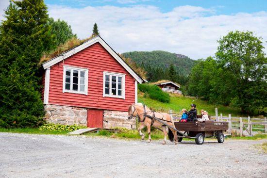 Norwegian Fjord Horse Center
