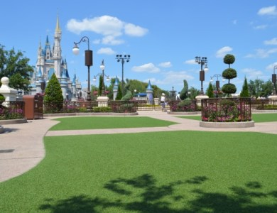 Hub Grass Magic Kingdom Wordless Wednesday