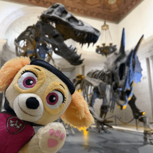 PAW Patrol Visits the Natural History Museum
