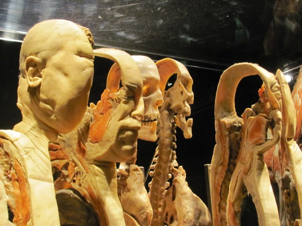 Human Body Exhibit World