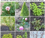 perennial plants for front yard