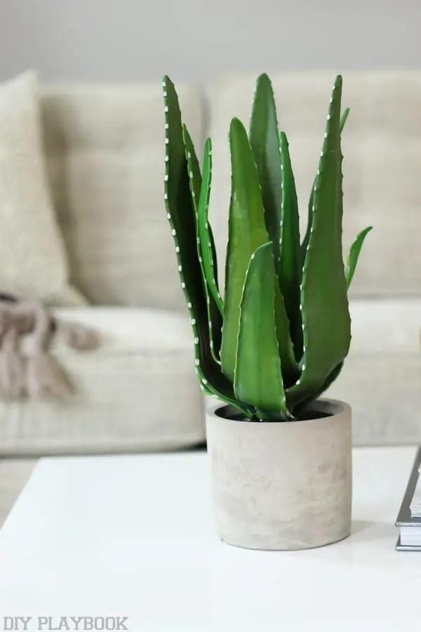 maggie aloe plant