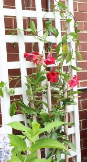 backyard flowers trellis landscaping