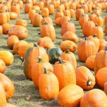 08-pumpkins-october-bengstons