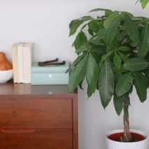 10-casey-bedroom-indoor-plant