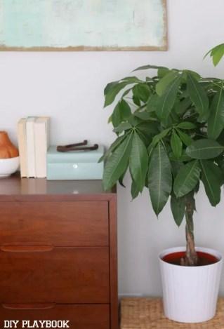 10-casey-bedroom-indoor-plant