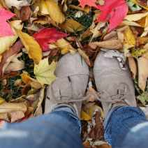 Fall Leaves TOMS Shoes
