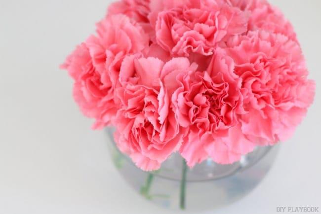 6-carnations-flowers-pink-vase