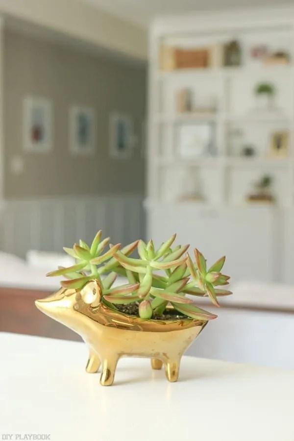 succulent_west_elm_plant-4